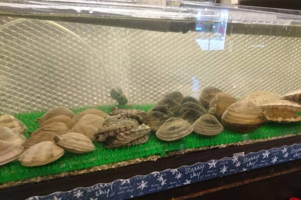 徳島の活魚水槽・生簀はむしゅびす