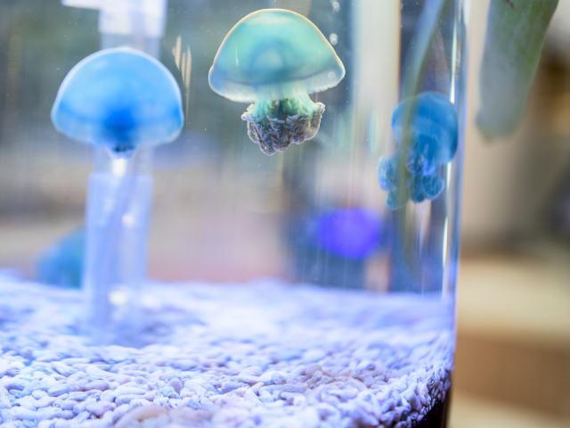 おすすめの生け簀(いけす)、活魚水槽の販売、HONAMIスーパーナチュラルシステム-四国エリア、徳島むしゅびす-